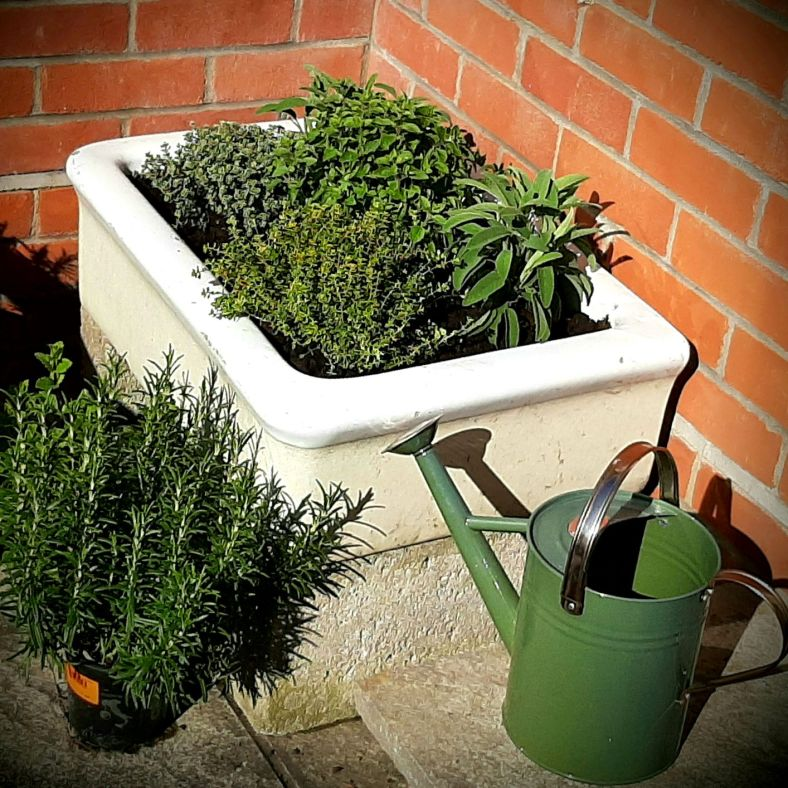 Colour photograph of a Belfast sink planted with herbs, and a green watering can.